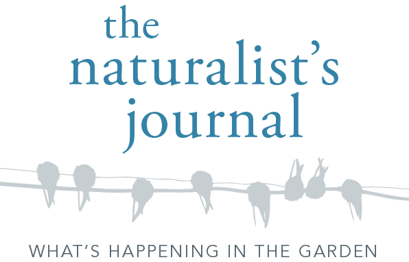 The Naturalist's Journal: What's happening in the garden