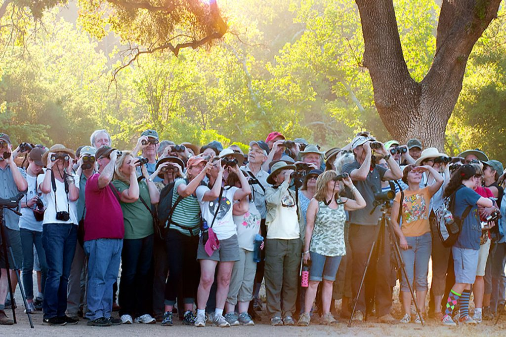 Flock of Birders, Bird LA Day