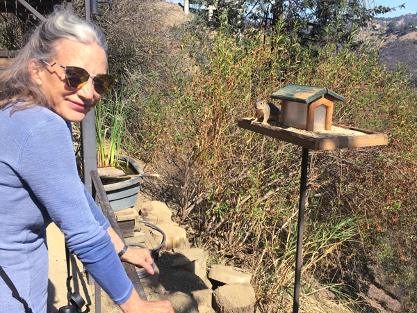 A fox squirrel in the back platform feeder shows Susan who's boss in this garden!